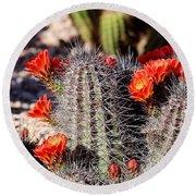 Cactus Bloom 033114f Round Beach Towel