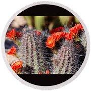 Cactus Bloom 033114g Round Beach Towel