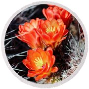 Cactus Bloom 033114j Round Beach Towel