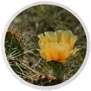 Cactus Bloom Round Beach Towel