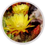 Cactus Bloom In Yellow 050715ab Round Beach Towel