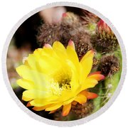 Cactus Blooms Yellow 050214g Round Beach Towel