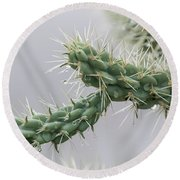 Cactus Branch With Wet White Long Needles Round Beach Towel