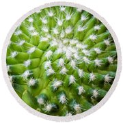 Cactus Feathers Round Beach Towel