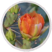 Cactus Flower And Buds Round Beach Towel