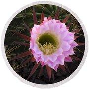 Cactus Flower Arizona 1 Round Beach Towel