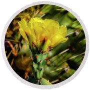 Cactus Flower H28 Round Beach Towel