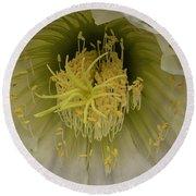 Cactus Flower Macro Round Beach Towel