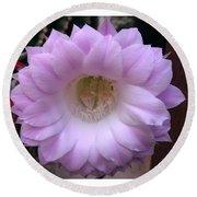 Cactus Flower Purple Round Beach Towel