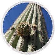 Cactus Height  Round Beach Towel