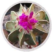 Cactus In Flower Round Beach Towel