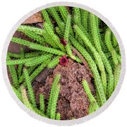 Cactus Splendor Round Beach Towel