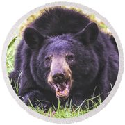 Cades Cove Black Bear Round Beach Towel
