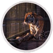 Caged King Of The Jungle Round Beach Towel