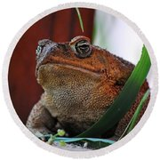 Cain Toad Round Beach Towel