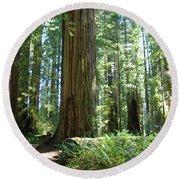California Redwood Forest Trees Art Prints Round Beach Towel