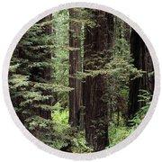 California Redwoods Round Beach Towel