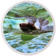 California Sea Lion-1611 Round Beach Towel