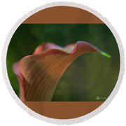 Calla Lily Close-up Round Beach Towel