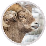Calling All Ewes Round Beach Towel