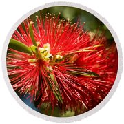 Callistemon Round Beach Towel