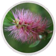Callistemon Viminalis Taree Pink Weeping Bottlebrush Flowering Trees Of Hawaii Round Beach Towel