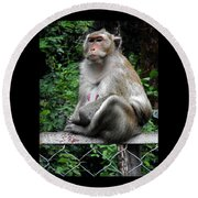 Cambodia Monkeys 3 Round Beach Towel