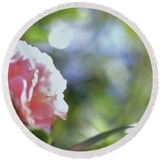 Camellia And Early Light Round Beach Towel