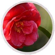 Camellia Rosette Round Beach Towel