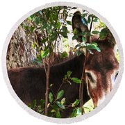 Camera Shy Donkey Round Beach Towel