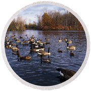 Canada Geese Branta Canadensis Round Beach Towel