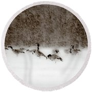 Canada Geese Feeding In Winter Round Beach Towel