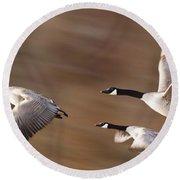 Canada Geese In Flight Round Beach Towel
