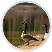 Canada Geese In Golden Sunlight Round Beach Towel
