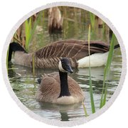 Canada Geese In Pond Round Beach Towel