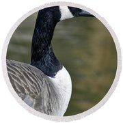 Canada Goose Portrait Round Beach Towel