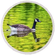 Canada Goose Swimming In A Pond Round Beach Towel