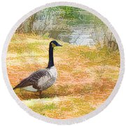 Canadian Geese 6 Round Beach Towel