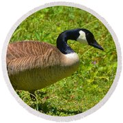 Canadian Goose Round Beach Towel