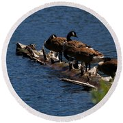Canada Goose Family Line-up Round Beach Towel