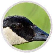 Canadian Goose Portrait Round Beach Towel