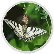 Canadian Tiger Swallowtail Butterfly-underside Round Beach Towel
