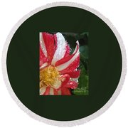 Candy Cane Dahlia Round Beach Towel