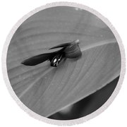 Canna In Black And White Round Beach Towel