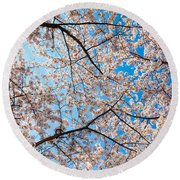 Canopy Of Cherry Blossoms Round Beach Towel