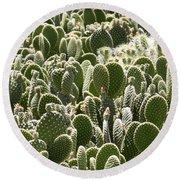 Canvas Of Cacti Round Beach Towel