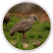 Cape Barren Geese Facing Right Round Beach Towel