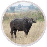 Cape Buffalo Eating Grass In Queen Elizabeth National Park, Ugan Round Beach Towel