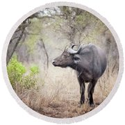Cape Buffalo In A Clearing Round Beach Towel
