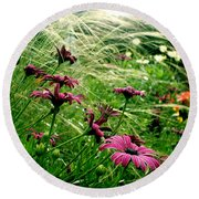 Cape Daisies And Angel Hair Round Beach Towel